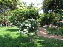 Kwiatonośny drzewo Fotografia Stock