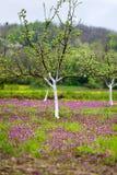 Kwiatonośny drzewo na polu Obrazy Royalty Free