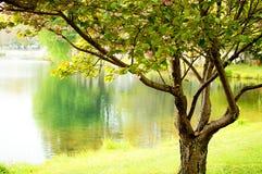 Drzewo i staw zdjęcia royalty free