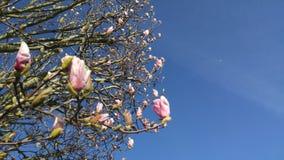 Kwiatonośny drzewo z niebieskim niebem Obraz Stock