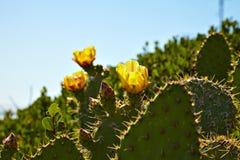 Kwiatonośny kaktus i indianin koc wildflowers Fotografia Stock