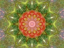 Kwiatonośny Klonowy kalejdoskop Zdjęcia Stock
