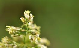 kwiatostan Obraz Stock