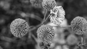 kwiatostan zdjęcie royalty free