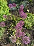 Kwiatu łóżko Obraz Royalty Free