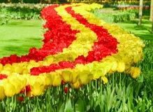 Kwiatu łóżko czerwoni i żółci tulipany Zdjęcie Royalty Free