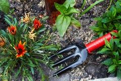 Kwiatu łóżko i Ogrodniczy rozmaity zdjęcie royalty free