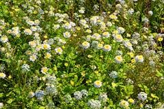Kwiatu łóżko jesień kwiaty Obraz Royalty Free