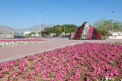 Kwiatu łóżko w mieście Fujairah Fotografia Royalty Free