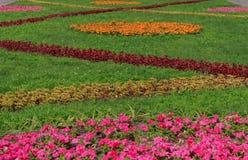Kwiatu łóżko w ogródzie Obrazy Stock