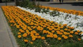 Kwiatu łóżko w parku zbiory wideo