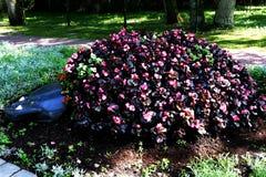 Kwiatu łóżko w postaci motyla obraz stock