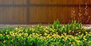 Kwiatu łóżko w wiośnie Zdjęcia Stock