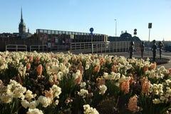 Kwiatu łóżko z hiacyntami i daffodils w Sztokholm Szwecja w wiośnie obrazy royalty free
