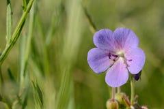 kwiatu łąki gdzieś wiosna drewna Fotografia Stock