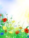 kwiatu łąki lato Zdjęcia Stock