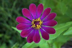 kwiatu ładny różowy Obrazy Royalty Free