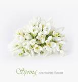 kwiatu śnieżyczki wiosna Obraz Royalty Free