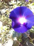 Kwiatu światło Fotografia Stock