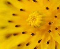 Kwiatu abstrakt. Zdjęcie Royalty Free