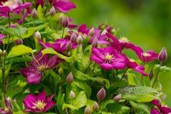 Kwiatu abstrakta tło Zdjęcia Royalty Free