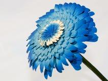 kwiatu błękitny drewno Zdjęcia Royalty Free