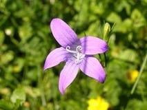 kwiatu bez Fotografia Stock