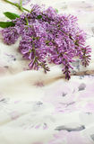kwiatu bez Obraz Stock