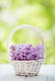 kwiatu bez Obrazy Royalty Free