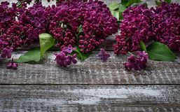 Kwiatu bez na drewnianym tle Obrazy Stock