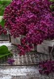 Kwiatu bez na drewnianym tle Obraz Royalty Free