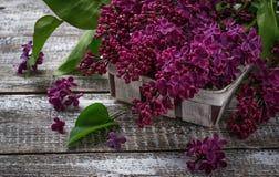 Kwiatu bez na drewnianym tle Obrazy Royalty Free