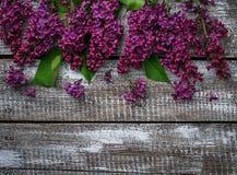 Kwiatu bez na drewnianym tle Zdjęcie Royalty Free