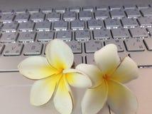 Kwiatu biały ładny Zdjęcie Royalty Free