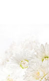 kwiatu biel obraz stock