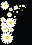 kwiatu biel ilustracja wektor
