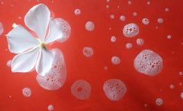 kwiatu biel Zdjęcie Stock