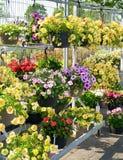 kwiatu centrum ogród Fotografia Stock