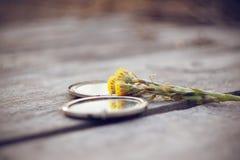 Kwiatu coltsfoot kłamstwo z otwartym kieszeni lustrem zdjęcie royalty free