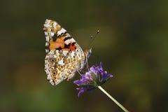 kwiatu dama malować purpury Obraz Stock