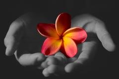 Kwiatu dawca fotografia stock