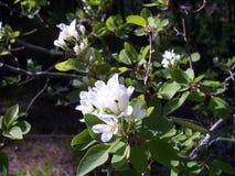 Kwiatu dorośnięcie dziki w lesie fotografia stock