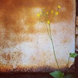 kwiatu dorośnięcie przy kątem Zdjęcia Stock