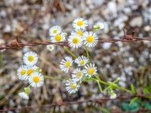 kwiatu drut Obrazy Royalty Free