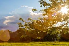 Kwiatu drzewa szczytu ulistnienie Obrazy Royalty Free