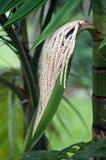 kwiatu drzewko palmowe Obrazy Stock