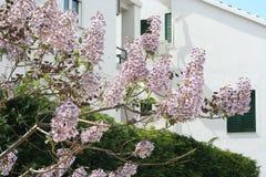 kwiatu drzewo Fotografia Stock