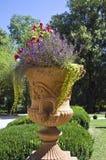 Kwiatu duży garnek. Zdjęcie Stock