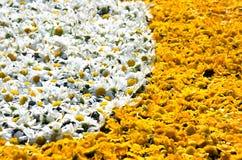 Kwiatu dywan Fotografia Royalty Free