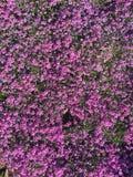 Kwiatu dywan Obrazy Stock